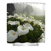 Calla Lilies Zantedeschia Aethiopica Shower Curtain