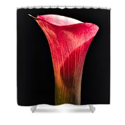Calla Lily 2 Shower Curtain