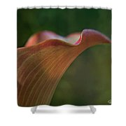 Calla Lily Close-up Shower Curtain