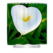 Calla Lily Closeup At Pilgrim Place In Claremont-california Shower Curtain