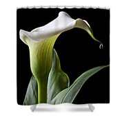 Calla Lily With Drip Shower Curtain