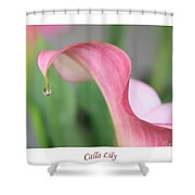 Calla Lily With White Border Shower Curtain