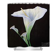 Calla Lily X Shower Curtain