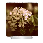 Callery Pear Blossoms Shower Curtain