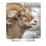 Calling All Ewes Shower Curtain