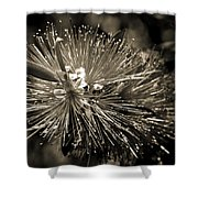 Callistemon II Shower Curtain