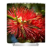 Callistemon Shower Curtain