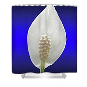 Callow Lily Shower Curtain