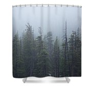 Calm Forest Shower Curtain