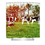 Calves In Spring Field Shower Curtain