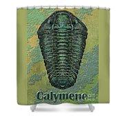 Calymene Niagarensis Shower Curtain