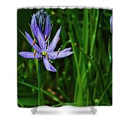 Camas Lily Shower Curtain