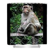Cambodia Monkeys 3 Shower Curtain