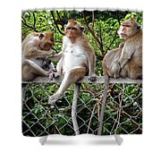Cambodia Monkeys 7 Shower Curtain