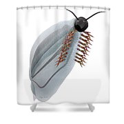 Cambrian Pikaia Fish Shower Curtain