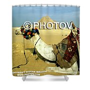 Camel And The Great Pyramids Of Giza - Egypt Shower Curtain