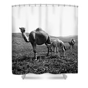 Camel And Young Shower Curtain