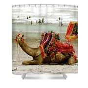 Camel For Ride  Shower Curtain