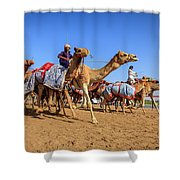 Camel Racing In Dubai Shower Curtain
