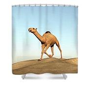 Camel Running - 3d Render Shower Curtain