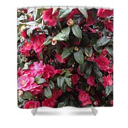 Camelia Shower Curtain