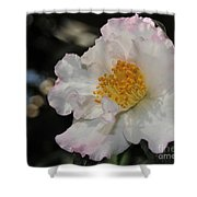 Camellia 1 Shower Curtain