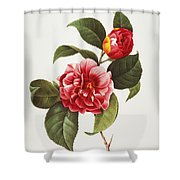 Camellia, 1833 Shower Curtain