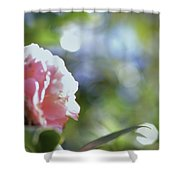 Camellia And Early Light Shower Curtain