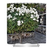 Camellia Blossoms Shower Curtain