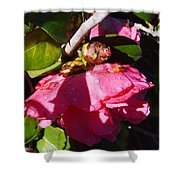 Camellia Light And Bud Shower Curtain