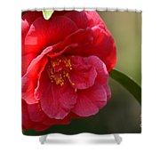 Camellia Rosette Shower Curtain