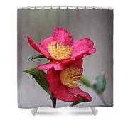Camellia Sasanqua Yuletide 1 Shower Curtain