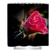 Camellia Silhouette  Shower Curtain