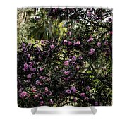 Camellia Tree Shower Curtain