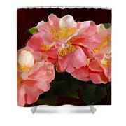 Camellias 1cmods1b Digital Painting Gulf Coast Florida Shower Curtain