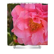 Camellias Of The South Shower Curtain