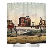 Camels And Litter Shower Curtain