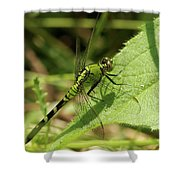 Cameo Green Dragonfly Shower Curtain