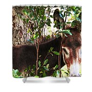 Camera Shy Donkey Shower Curtain
