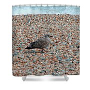 Camo Chick Shower Curtain