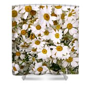 Camomiles Shower Curtain