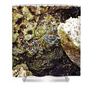 Camouflaged Crab Shower Curtain