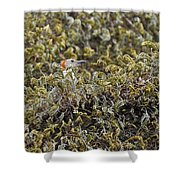 Camouflaged Red-bellied Woodpecker Shower Curtain