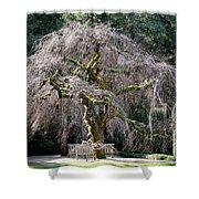 Camperdown Elm Tree Shower Curtain