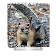Campground Chipmunk Shower Curtain