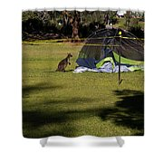 Camping With Swamp Wallaby Shower Curtain