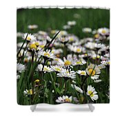 Campo Di Margherite Shower Curtain