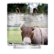 Can I Burro Your Camera? Shower Curtain