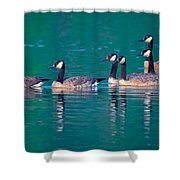 Canada Geese 2 Shower Curtain