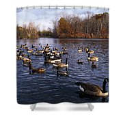 Canada Geese Branta Canadensis Shower Curtain